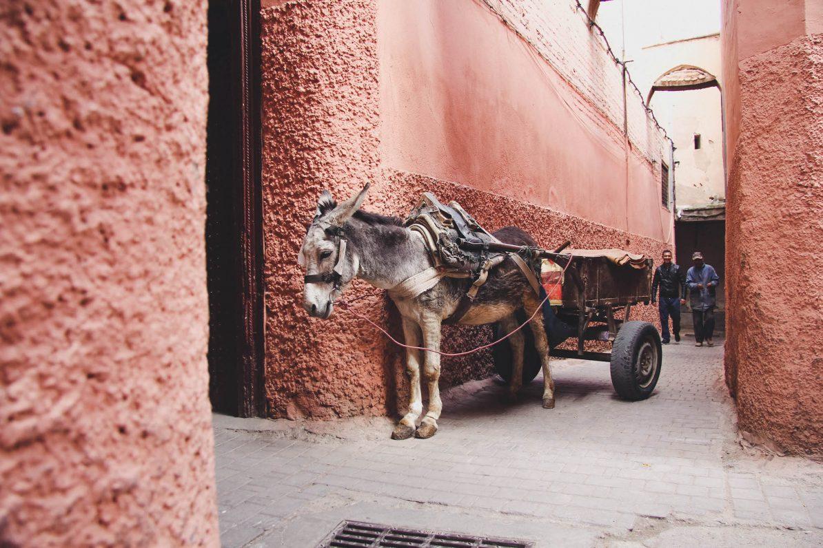 Marrakesch: Ein Eselkarren parkt in der Medina